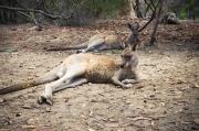Australien_South-317