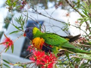 Australien_South-50