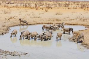 Namibia Pic 102