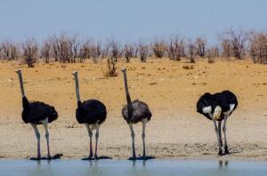 Namibia Pic 109