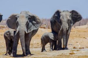Namibia Pic 111