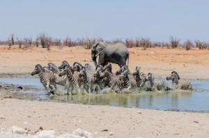 Namibia Pic 114