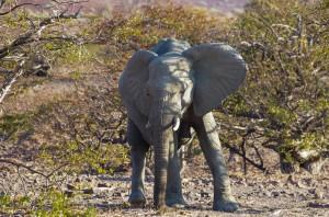 Namibia Pic 138