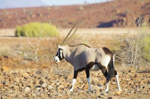 Namibia Pic 139