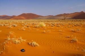 Namibia Pic 197