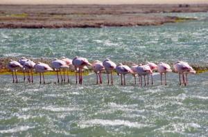 Namibia Pic 242