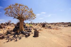 Namibia Pic 248