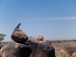 Namibia Pic 254