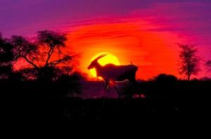 Namibia Pic 258
