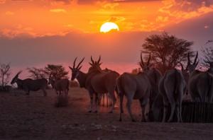 Namibia Pic 269