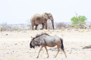 Namibia Pic 40