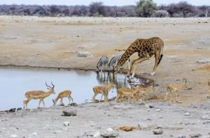 Namibia Pic 43