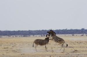 Namibia Pic 46