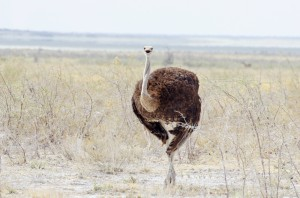 Namibia Pic 49