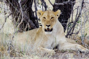 Namibia Pic 52