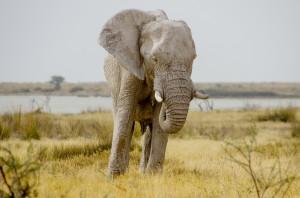 Namibia Pic 54