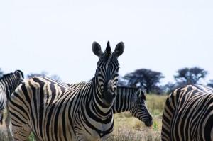 Namibia Pic 63