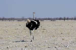 Namibia Pic 78