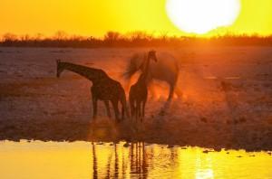 Namibia Pic 87