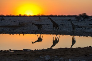 Namibia Pic 89