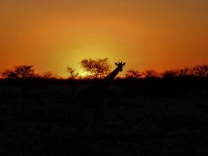Namibia Pic 90