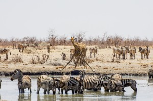 Namibia Pic 95