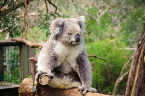 Australien_South-142