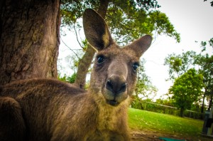 Australien_South-41