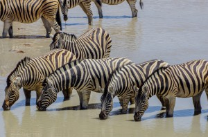 Namibia Pic 103