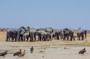 Namibia Pic 106