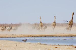 Namibia Pic 115