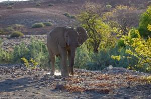 Namibia Pic 136