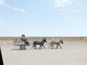Namibia Pic 272