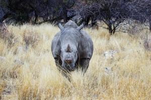 Namibia Pic 32
