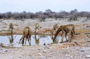 Namibia Pic 39