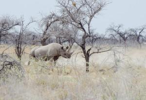 Namibia Pic 50