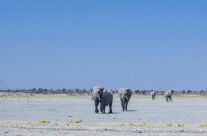 Namibia Pic 65