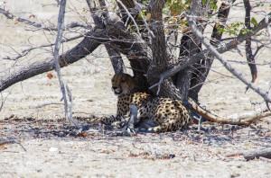 Namibia Pic 68