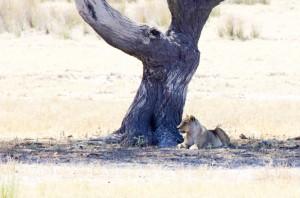 Namibia Pic 76