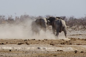 Namibia Pic 80