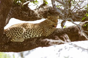 Southafrica-39